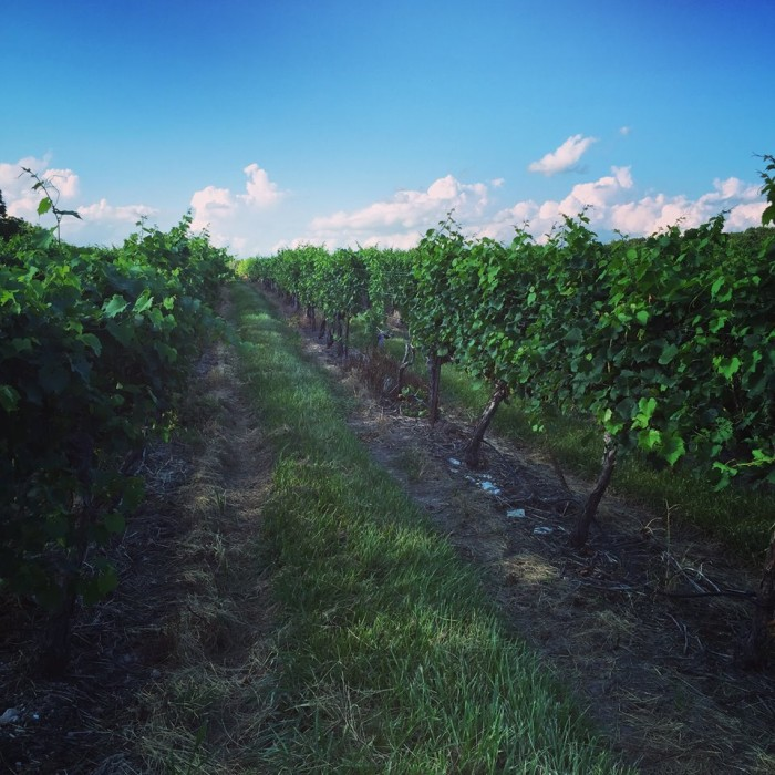13.Vineyards and wineries.
