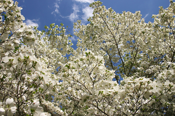 5. Our iconic state flower and tree