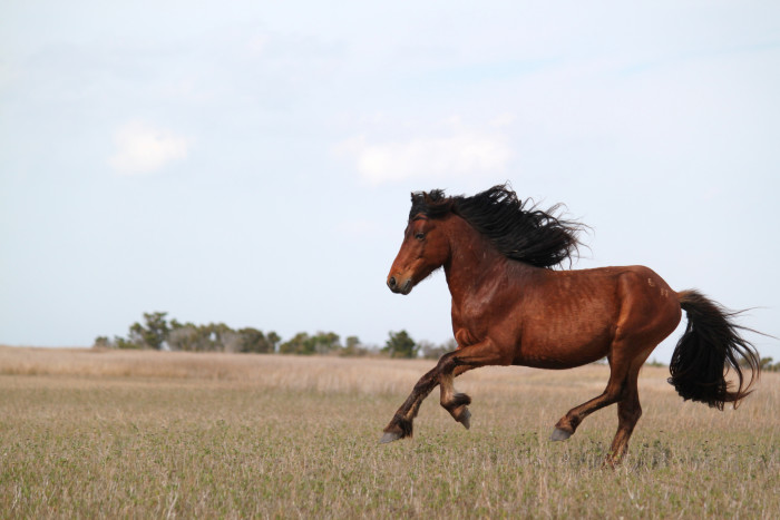 5. Where else can you see wild horses grazing wind swept sand dunes?