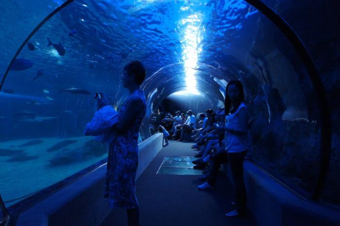 14. Check out the sea life at the Maui Ocean Center or the Waikiki Aquarium.
