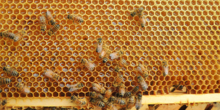 10. We also are the top producers in a lot of other things, even honey! We are the ENTIRE nation's #1 honey producer.