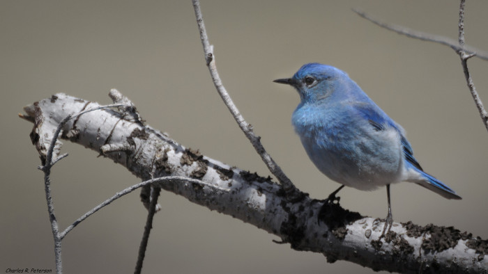 3. Songbirds begin making their way back home.