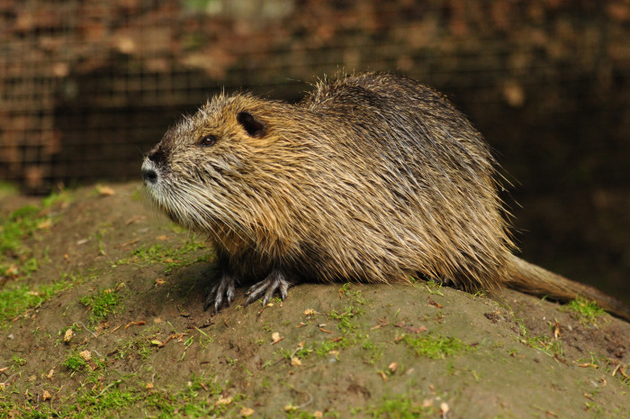 2. The number of nutria you've shot