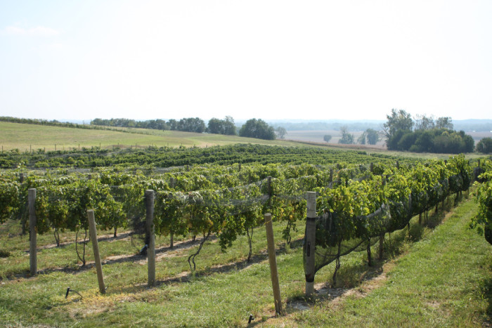 4. Visit Nebraska Wine Country.
