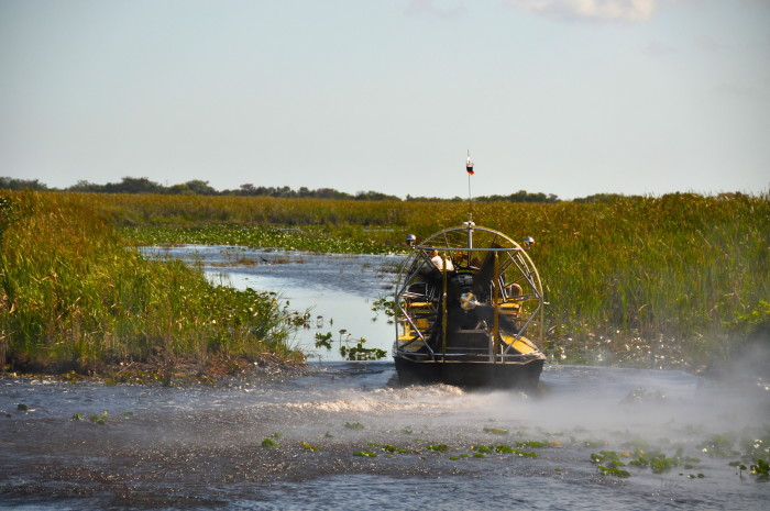 5. How you don't even need bug spray when you're in the swamp