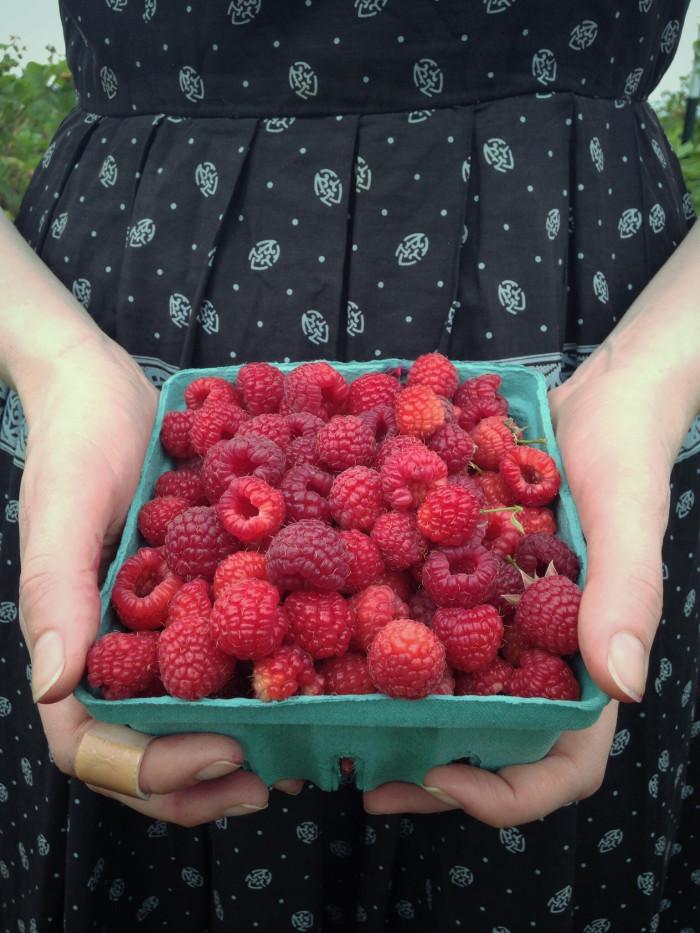 7. Go berry-picking.