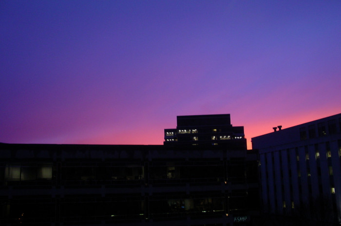 10. Bethesda looking pretty in pink and purple.