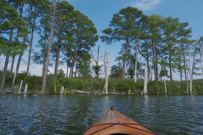 8. Blackwater National Wildlife Refuge