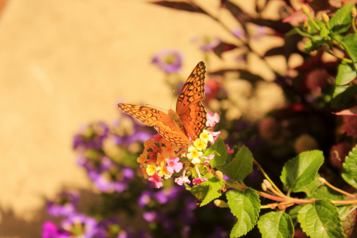 They even have a butterfly garden on the premise!