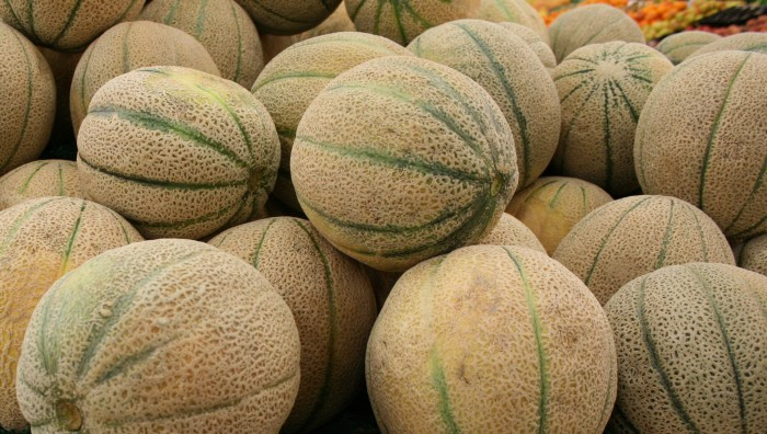 15. Muscatine melons