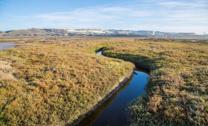 7. Border Field State Park