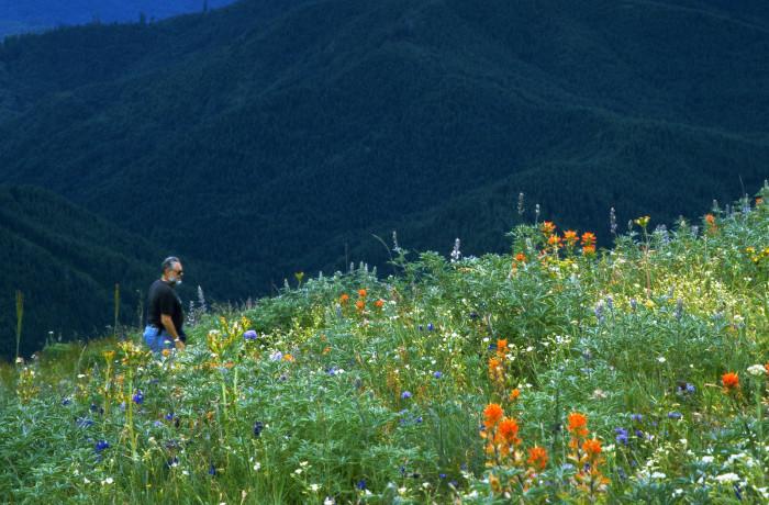 4. Mary's Peak Summit Hike.