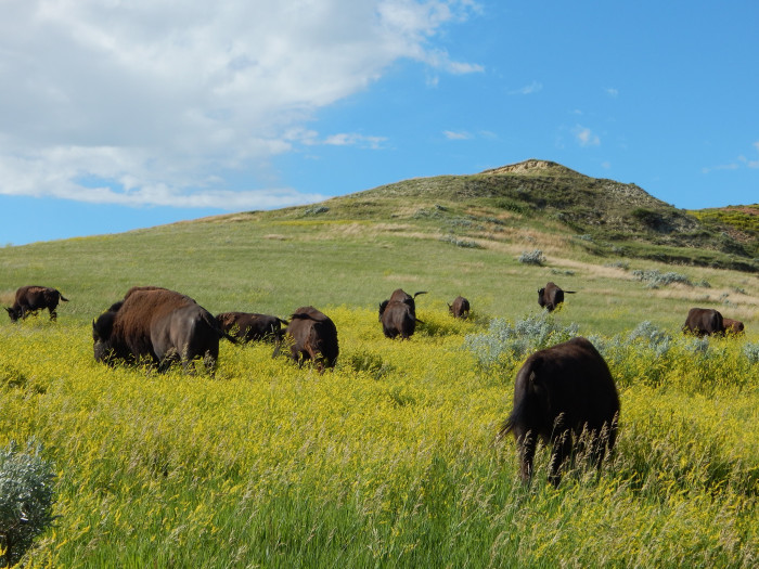 7. North Dakota has so much wildlife and a respect for it.