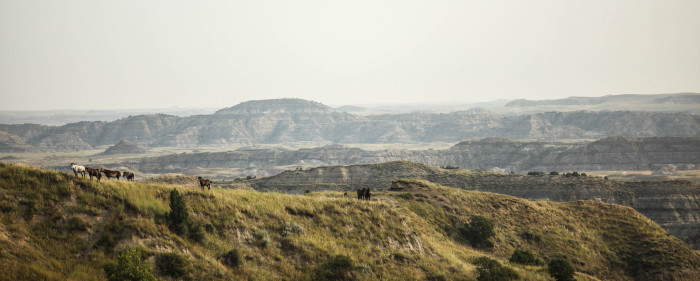 7. This herd of wild horses crosses a ridge in the Theodore Roosevelt National Park