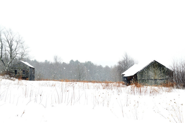 8. Snowfall at Spectacle Pond Farm reminds us that even in the dead of a brutal Massachusetts winter, there is peaceful and serene beauty to the cold season.
