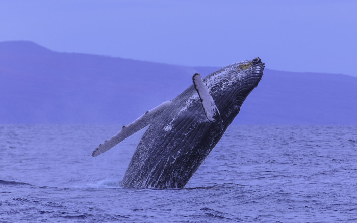17. Watch whales frolicking off the coast.