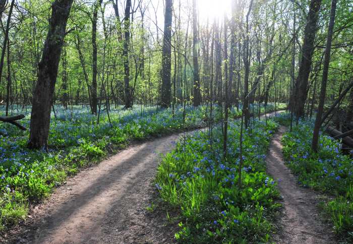 5. The aptly named Bluebell Trail