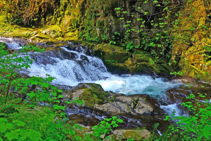 7. Sweet Creek Trail.