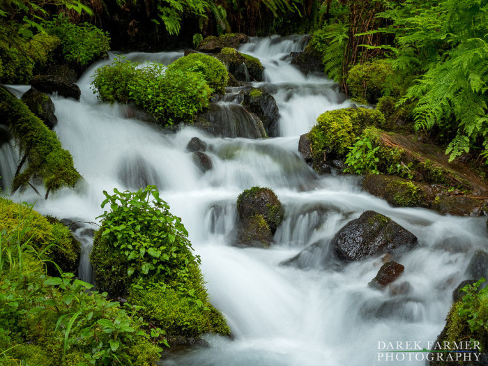 The unusual spring gushes directly out of the forest floor and flows downhill before forming Wahkeena Falls.