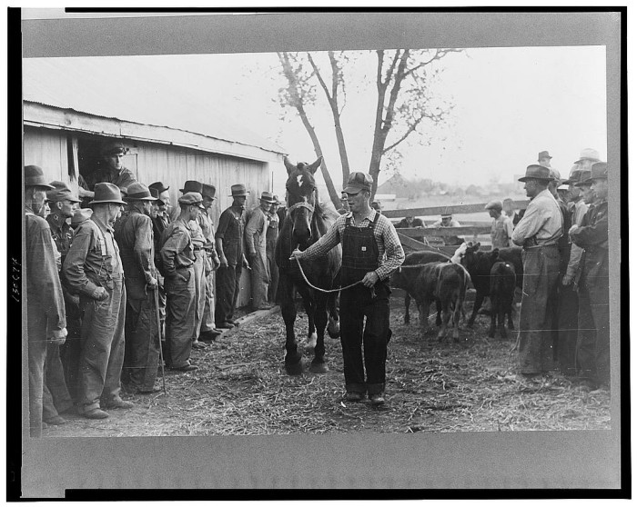 2.	A horse is paraded before prospective buyers at a farm sale, Pettis County, November 1939.
