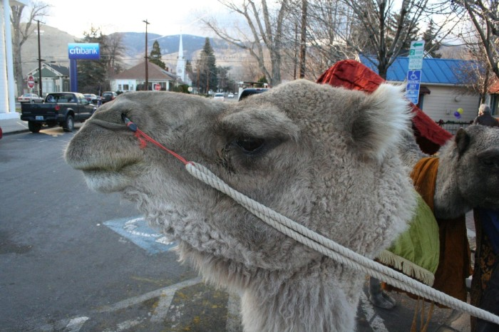 4. It's illegal to drive a camel on any highway in Nevada.