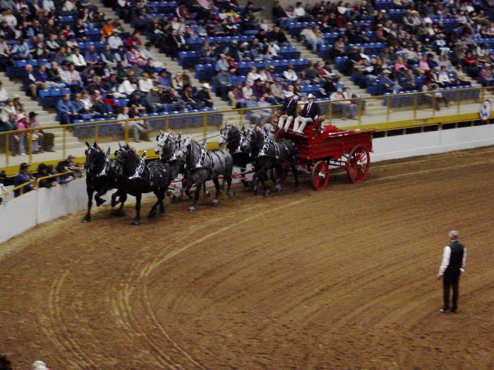 3.) Pay tribute to Colorado's western roots by attending the National Western Stock Show.