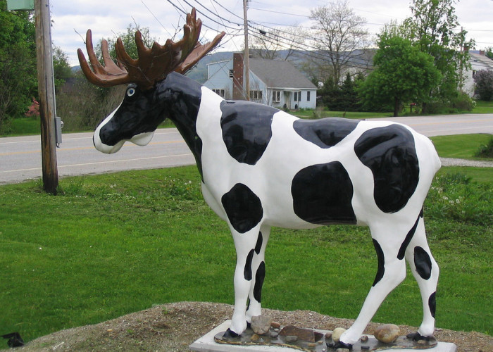 10.  Bennington painted cows, and more