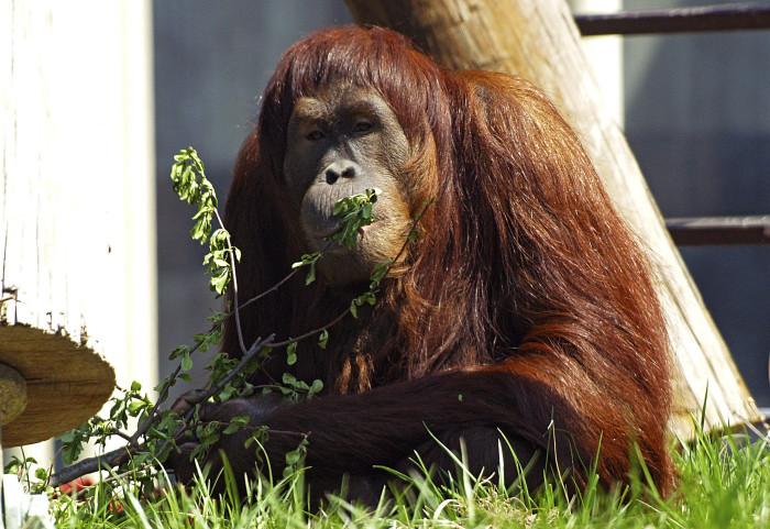 9. The Columbus Zoo and Aquarium is the best in America.