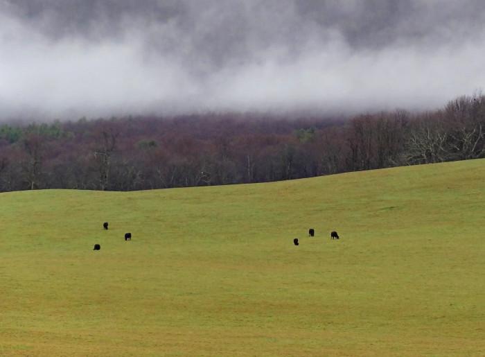 1. It's a rural heaven...