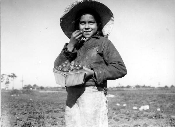 12. Young girl eating freshly picked strawberries