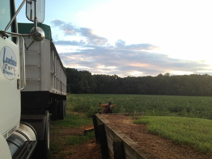 6. A seemingly endless evening sky against the shades of green at this farm west of Smyrna.