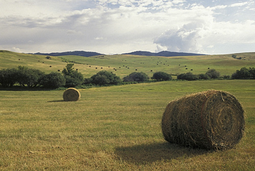 4. Rolling fields of hay bales out in the country.