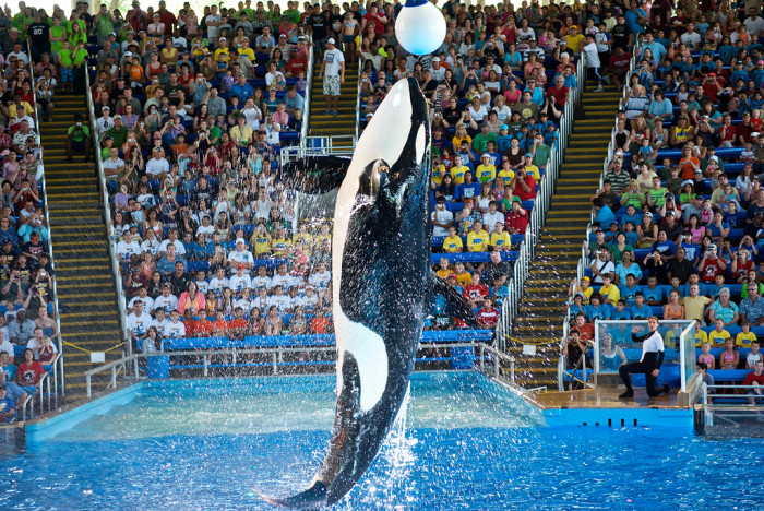 2. Pay Shamu a visit - while you still can.