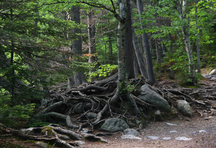 6. These roots look like they could be a fairy palace.