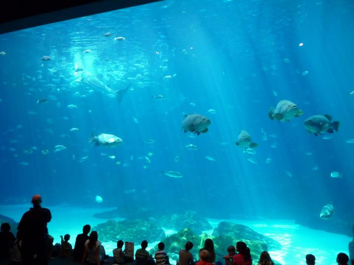 7. Maybe the Georgia Aquarium...