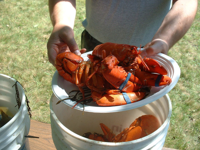2. Pick apart a lobster on a paper plate with your hands, while sitting outside.