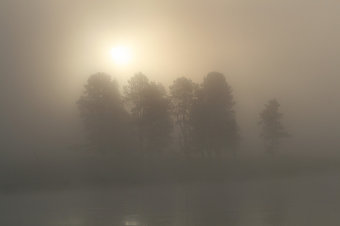 1. Early morning fog in Hayden Valley along the Yellowstone River