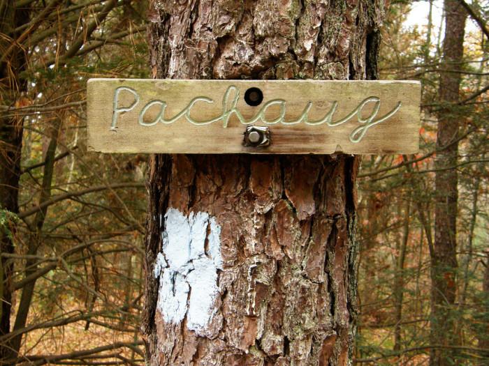 3. Pachaug State Forest (Voluntown)