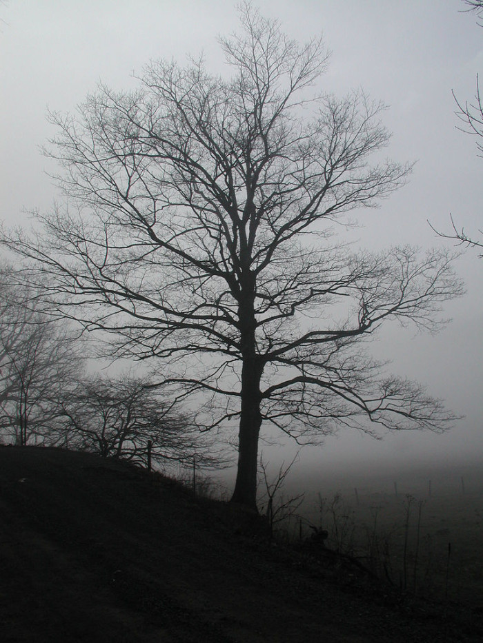 8. Eerie, but beautiful photograph.
