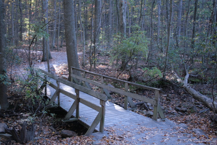 3. Head to your favorite Maryland state park and go for a walk, jog, or cycle.