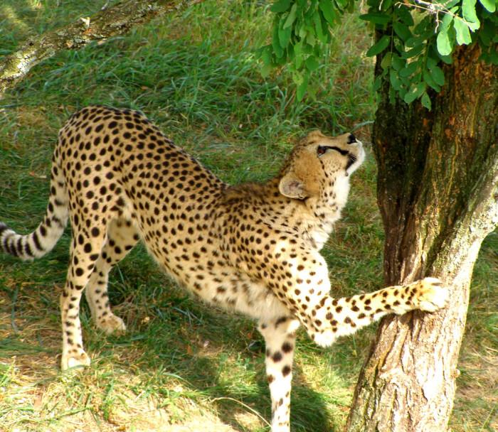 2. Take a safari.