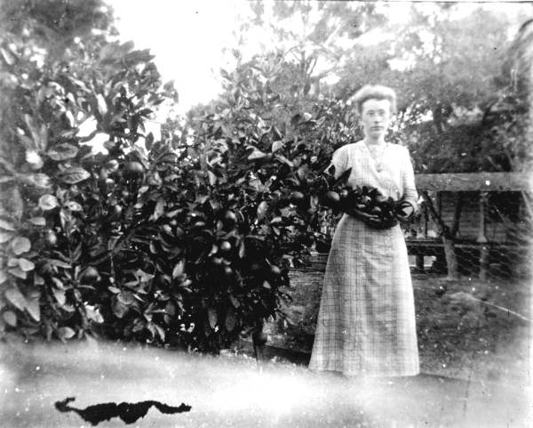 3. Woman picking citrus