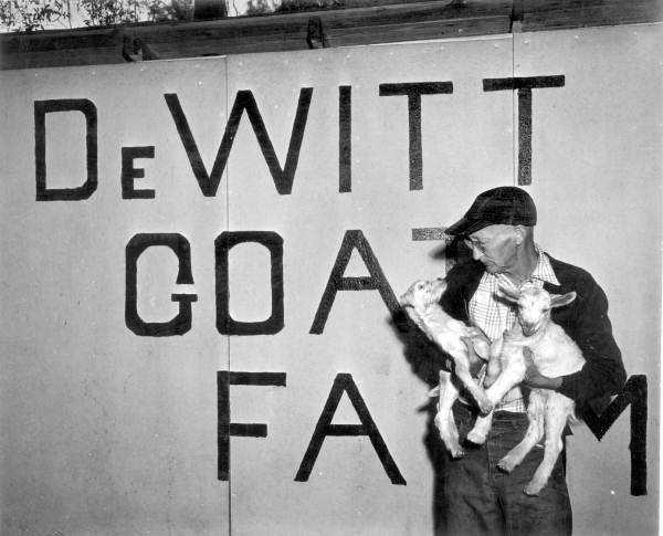 2. E.B. DeWitt holds the goats from his farm