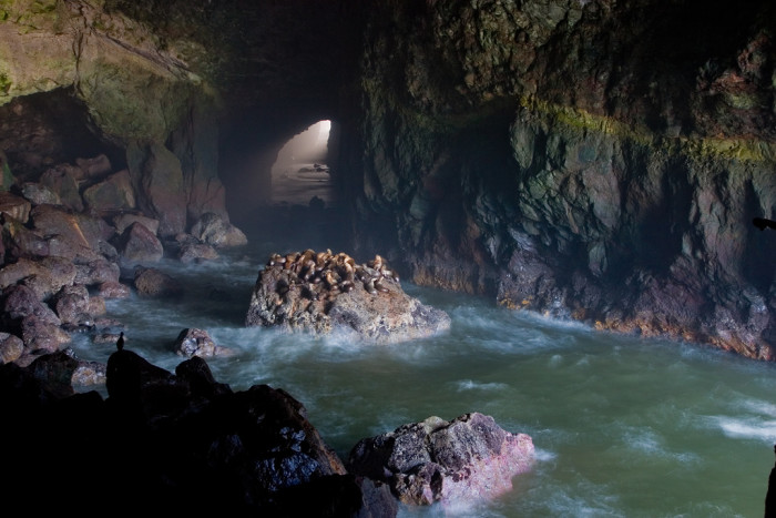 3. Oregon's Sea Lion Caves is the largest sea cave in the country.