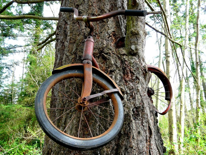 2. On Vashon Island, you can find a bike that's completely grown into a tree.