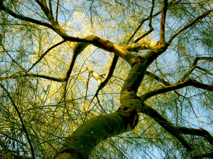 9. What some consider gangly trees, you think are sculptural, Seussian, and downright beautiful.