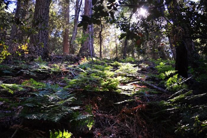 6. Hiking in Palomar Mountain State Park