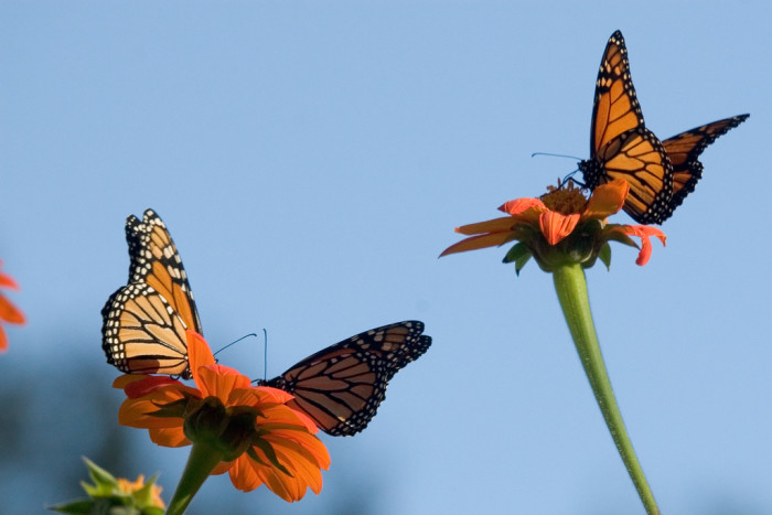 2. These butterflies in Prescott Park in Portsmouth are thoroughly enchanting.