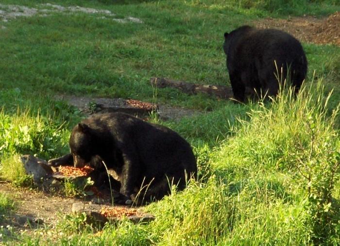 8. Visit the Vince Shute Wildlife Sanctuary.