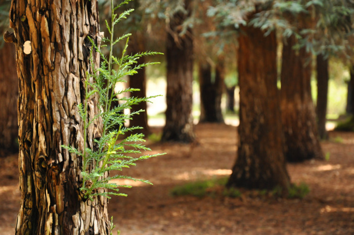 8. The Redwood Grove at Carbon Canyon Regional Park in Yorba Linda